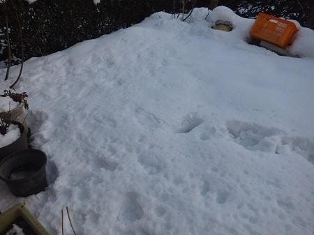庭の雪.jpg